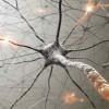 Notre vécu change l'anatomie du cerveau